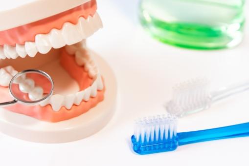 虫歯、歯周病の予防